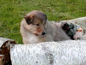 album/photo-portee-b_chiot-5s-3.jpg